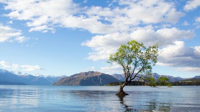 Photo on tree on lake